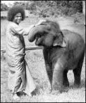 swamielephant
